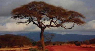 In Kenya prende piede il solo safari