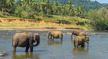 Sri Lanka in ripresa