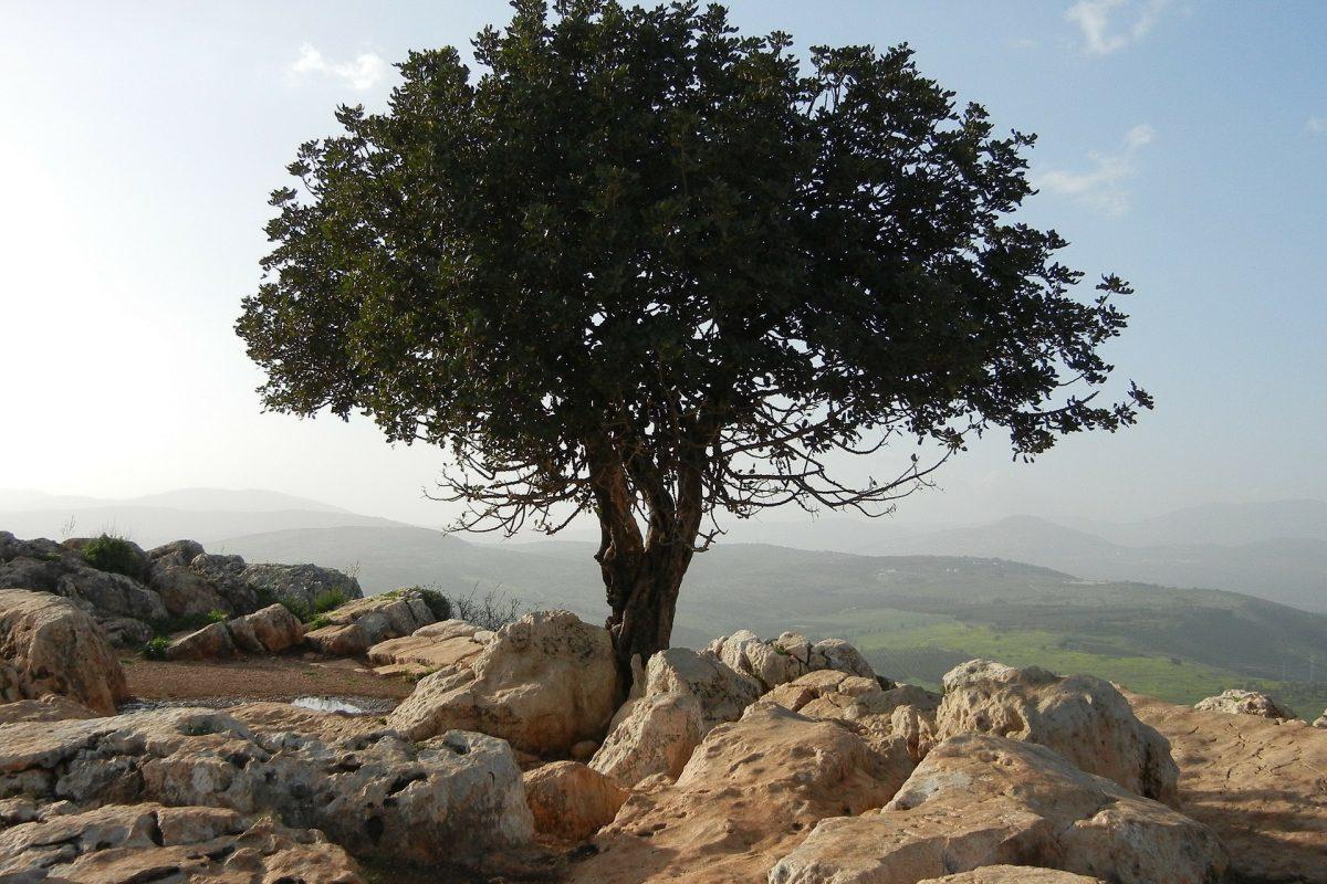 Parchi nazionali, così riparte l'offerta di Israele