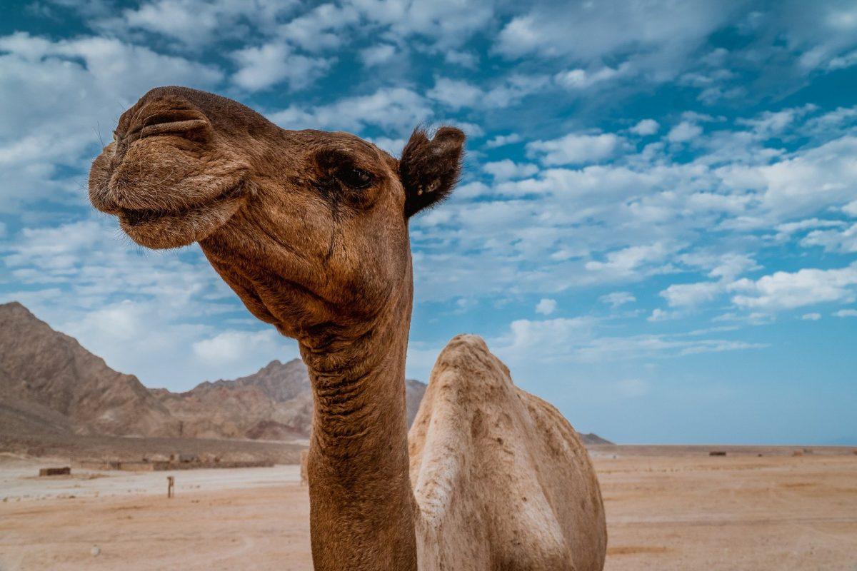 Un tech nel deserto: la sfida dell'Arabia Saudita