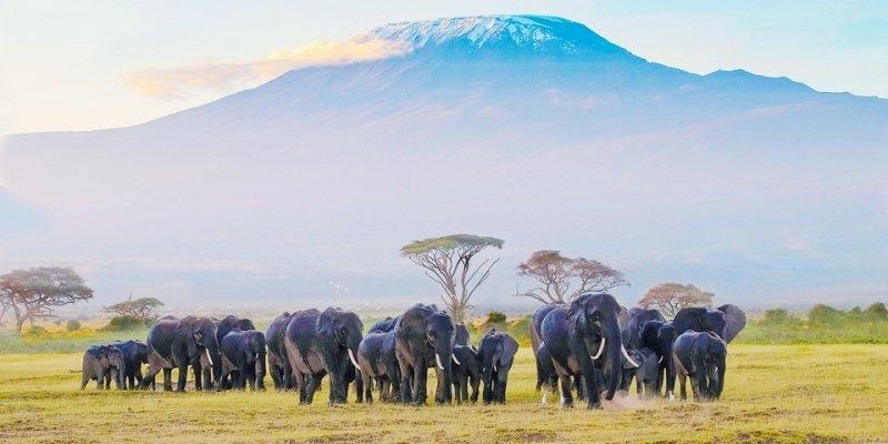 Il Kenya comunica di nuovo in Italia