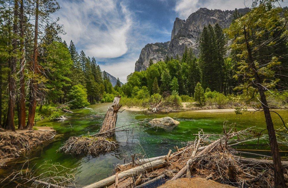 Sequoia National Forest: primato mondiale