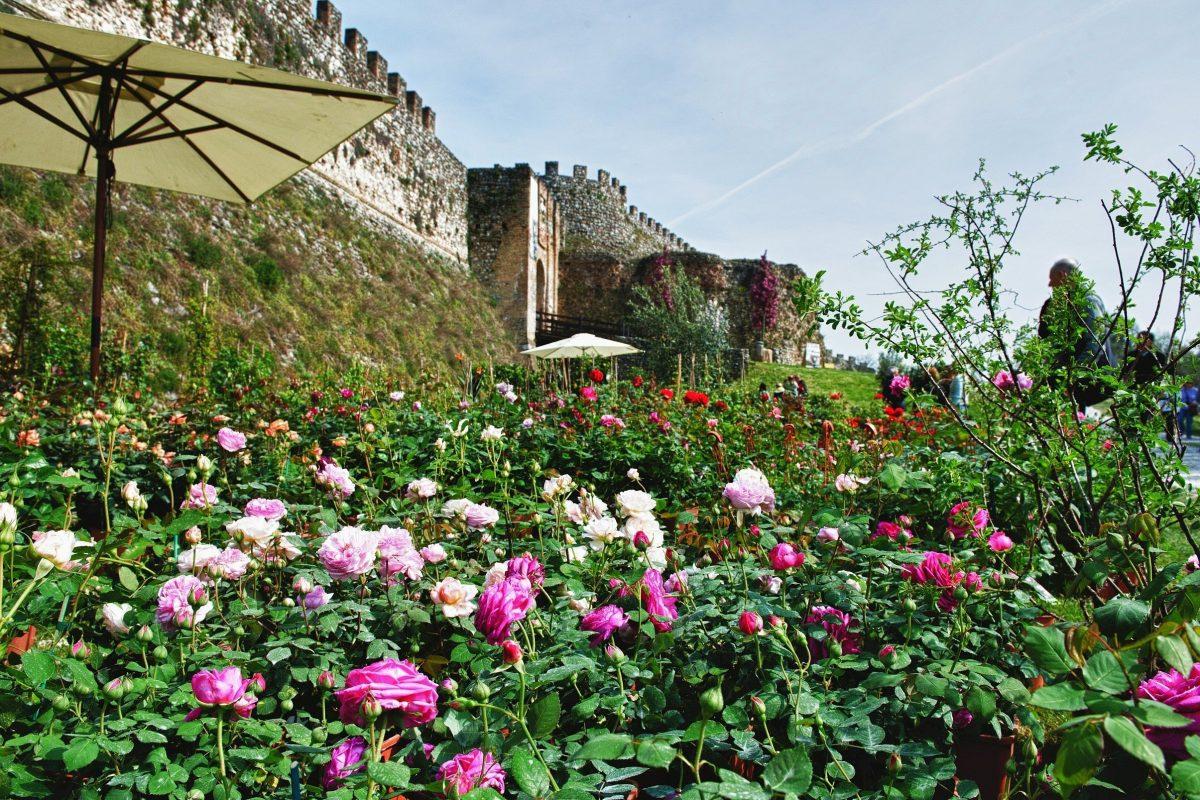 Fiori nella Rocca