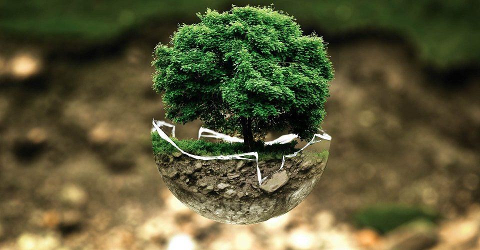 IpV: 600 nuovi alberi con il nome di altrettante adv