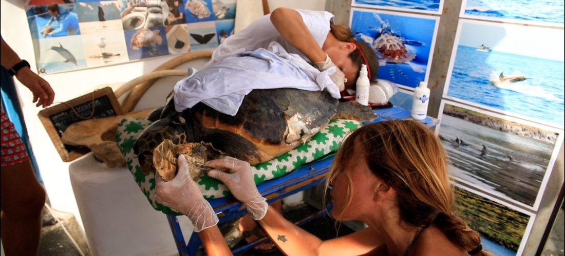 Il pronto soccorso per tartarughe di Filicudi