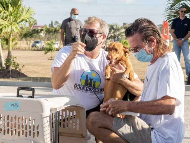 Barbados e Canada, un ponte per gli animali abbandonati