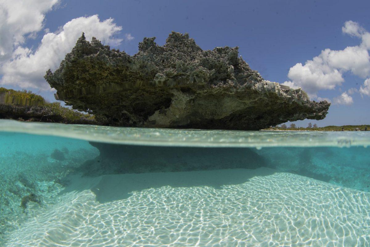 Il segreto di Aldabra