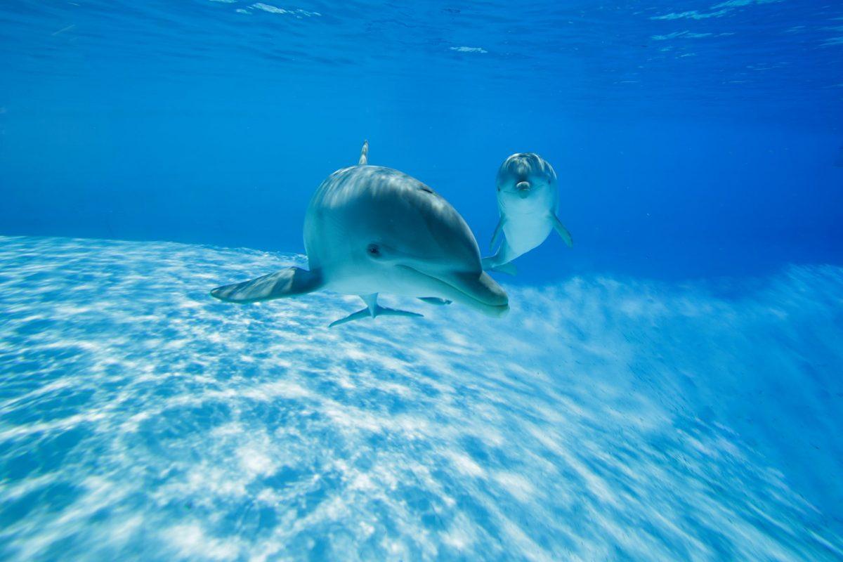 Delfini solidali